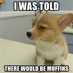 Unsure Corgi - I was told there would be muffins