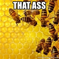 Honeybees - THAT ASS