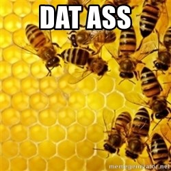 Honeybees - DAT ASS