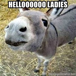 Assumptions Donkey - helloooooo ladies