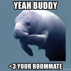 calming manatee - YEAH BUDDY <3 Your roommate