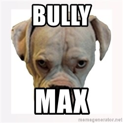 stahp guise - BULLY MAX