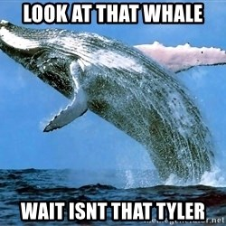 whaleeee - LOOK AT THAT WHALE WAIT ISNT THAT TYLER