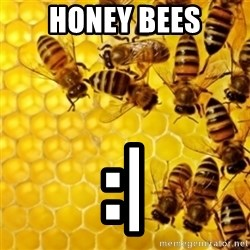 Honeybees - HONEY BEES :|