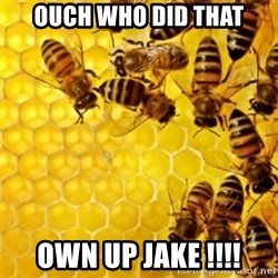 Honeybees - OUCH WHO DID THAT OWN UP JAKE !!!!
