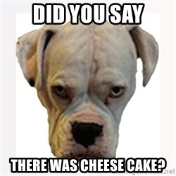 stahp guise - DID YOU SAY THERE WAS CHEESE CAKE?