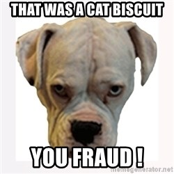 stahp guise - THAT WAS A CAT BISCUIT  YOU FRAUD !