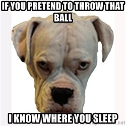 stahp guise - if you pretend to throw that ball  i know where you sleep