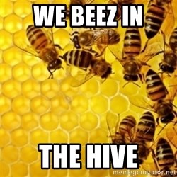 Honeybees - WE BEEZ IN  THE HIVE