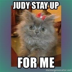 cute cat - Judy stay up for me