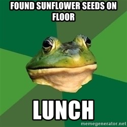 Foul Bachelor Frog - Found sunflower seeds on floor lunch
