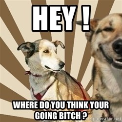 Stoner dogs concerned friend - HEY ! WHERE DO YOU THINK YOUR GOING BITCH ?
