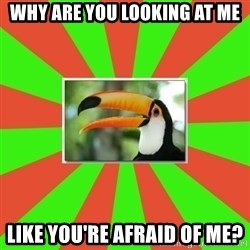 Tourette's Toucan - why are you looking at me like you're afraid of me?