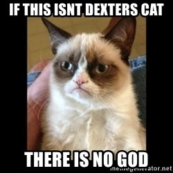 Frowning Cat - if this isnt dexters cat there is no god