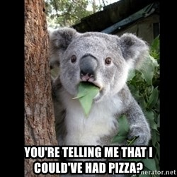 Koala can't believe it - You're telling me that i could've had pizza?