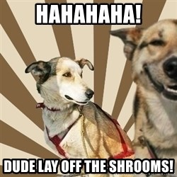 Stoner dogs concerned friend - HAHAHAHA! DUDE LAY OFF THE SHROOMS!