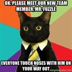 Business Cat - ok, please meet our new team member, mr. fuzzle everyone touch noses with him on your way out