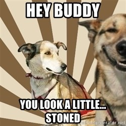 Stoner dogs concerned friend - Hey buddy you look a little... Stoned