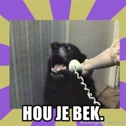 Yes, this is dog! - Hou Je Bek.