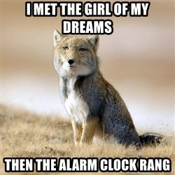 Disappointed Tibetan Fox - i met the girl of my dreams then the alarm clock rang