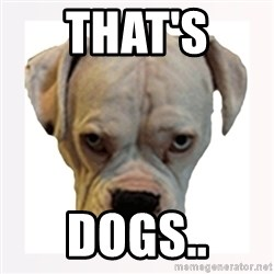 stahp guise - THAT'S  DOGS..
