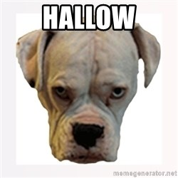 stahp guise - HALLOW