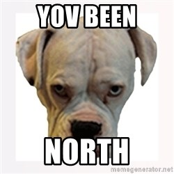 stahp guise - YOV BEEN NORTH