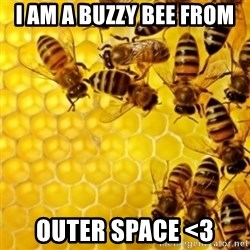 Honeybees - I AM A BUZZY BEE FROM  OUTER SPACE <3