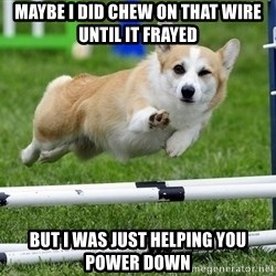 Ridiculously Photogenic Corgi  - maybe i did chew on that wire until it frayed but i was just helping you power down
