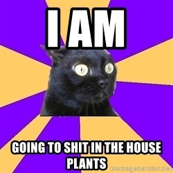 Anxiety Cat - i am  going to shit in the house plants