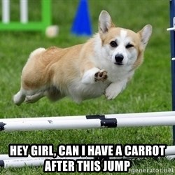 Ridiculously Photogenic Corgi  - hey girl, can i have a carrot after this jump