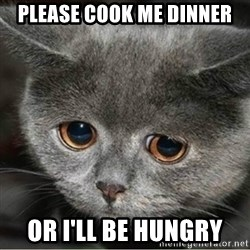 Sad Cute Cat - Please cook me dinner or i'll be hungry
