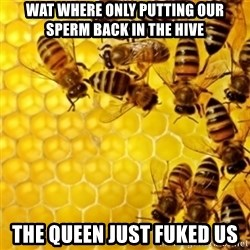 Honeybees - WAT WHERE ONLY PUTTING OUR SPERM BACK IN THE HIVE THE QUEEN JUST FUKED US
