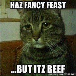 Depressed cat 2 - HAz Fancy Feast ...but itz beef