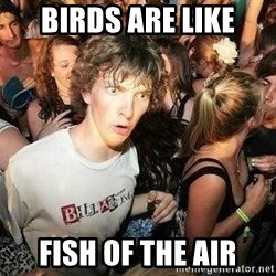 -Sudden Clarity Clarence - birds are like fish of the air