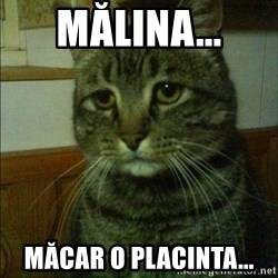 Depressed cat 2 - mĂlina... măcar o placinta...