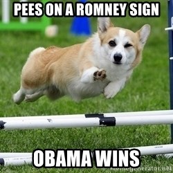 Ridiculously Photogenic Corgi  - Pees on a romney sign obama wins