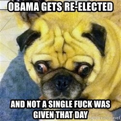 Perplexed Pug - obama gets re-elected and not a single fuck was given that day