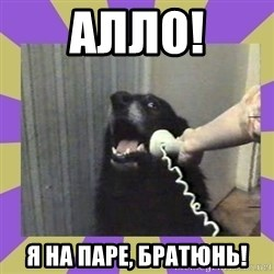 Yes, this is dog! - алло! я на паре, братюнь!