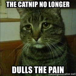 Depressed cat 2 - The catnip no longer Dulls the pain
