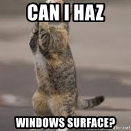 Begging Cat - CAN I HAZ WINDOWS SURFACE?
