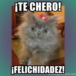 cute cat - ¡te chero! ¡felichidadez!