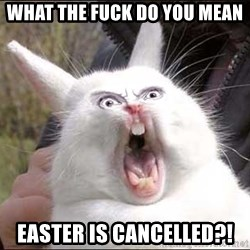 Rabbit On Alert - what the fuck do you mean easter is cancelled?!