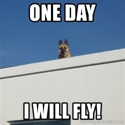 Roof Dog - ONE DAY I WILL FLY!