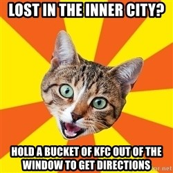 Bad Advice Cat - lost in the inner city? hold a bucket of kfc out of the window to get directions
