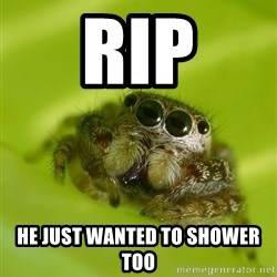Spiderbro - rip he just wanted to shower too