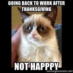 Frowning Cat - Going back to Work after thanksgiving Not Happpy
