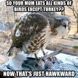 Hawkward - SO YOUR MOM EATS ALL KINDS OF BIRDS EXCEPT TURKEY?? NOW THAT'S JUST HAWKWARD