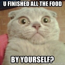 GEEZUS cat - U FINISHED ALL THE FOOD BY YOURSELF?