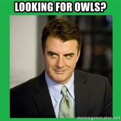 Mr.Big - Looking for owls?